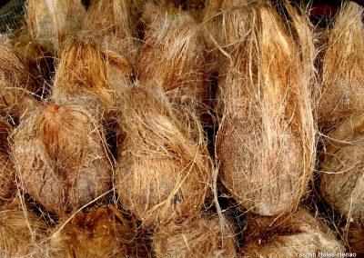 Ritual Coconuts
