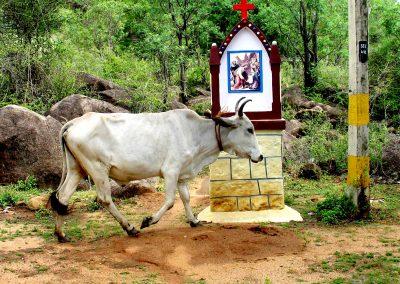 Indian PhD Research Trip Sept-Dec 06 Pondicherry, Tirunivelli 348